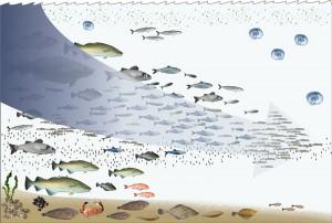 Επιχειρησιακό Πρόγραμμα Αλιείας - Μέτρο 2.3 Μεταποίηση & Εμπορία